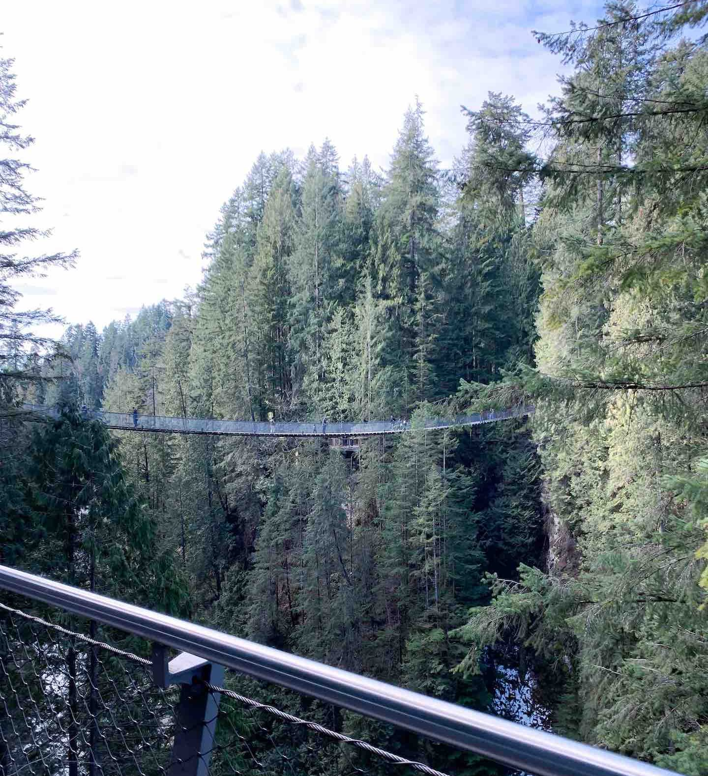 photo of a suspension bridge with a forest of pine trees behind it